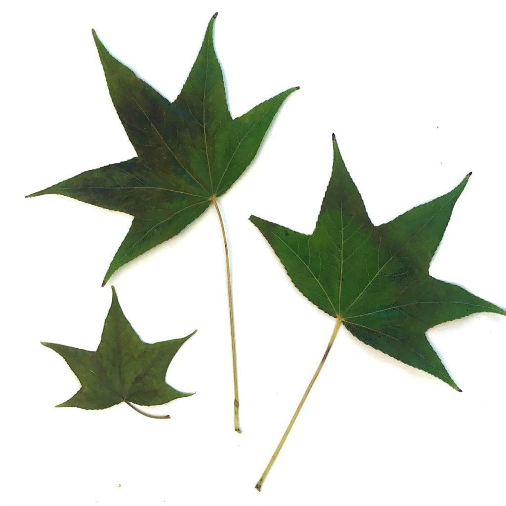 Metallic Doodle Leaf Art